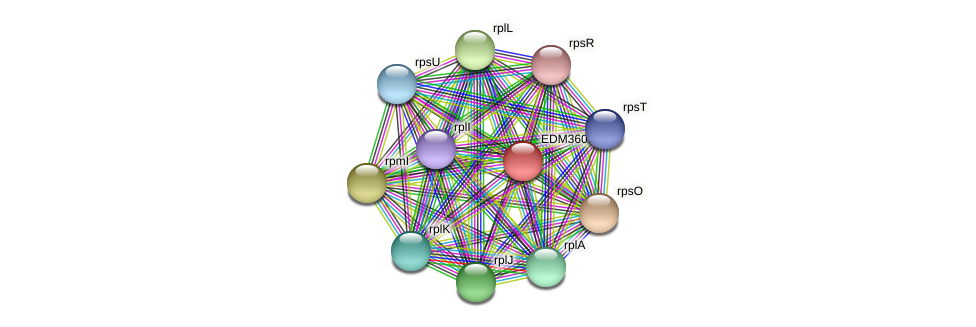 PBAL39_23852 protein (Pedobacter sp. BAL39) - STRING interaction network