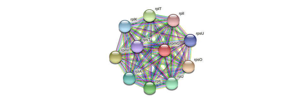 rpmG protein (Pedobacter sp. BAL39) - STRING interaction network
