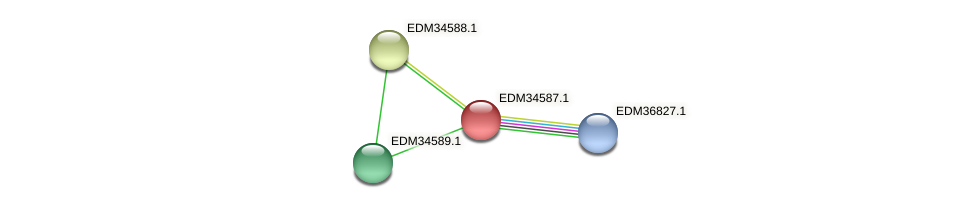 PBAL39_23938 protein (Pedobacter sp. BAL39) - STRING interaction network