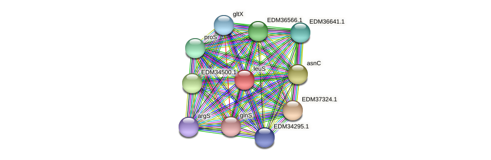 leuS protein (Pedobacter sp. BAL39) - STRING interaction network