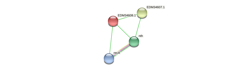 PBAL39_24043 protein (Pedobacter sp. BAL39) - STRING interaction network