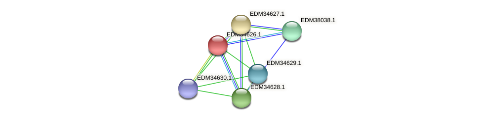 PBAL39_24133 protein (Pedobacter sp. BAL39) - STRING interaction network