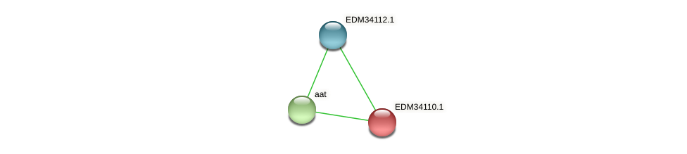 EDM34110.1 protein (Pedobacter sp. BAL39) - STRING interaction network