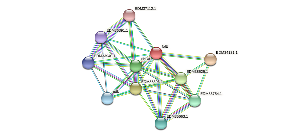 folE protein (Pedobacter sp. BAL39) - STRING interaction network