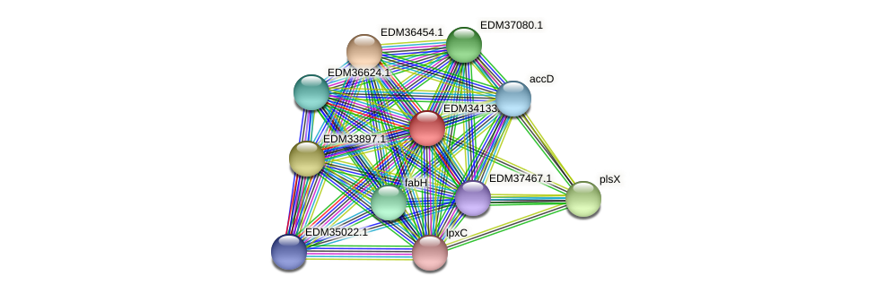 PBAL39_24450 protein (Pedobacter sp. BAL39) - STRING interaction network