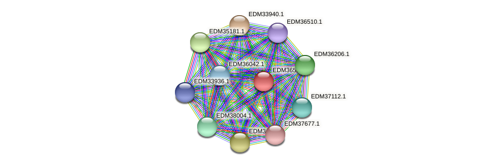 PBAL39_24625 protein (Pedobacter sp. BAL39) - STRING interaction network