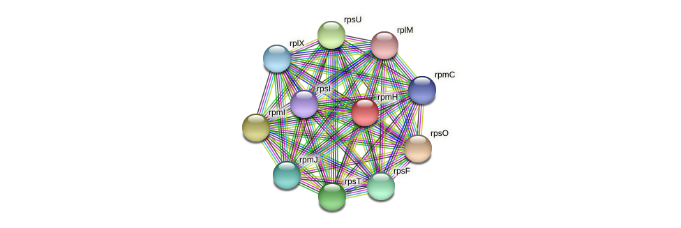 rpmH protein (Pedobacter sp. BAL39) - STRING interaction network
