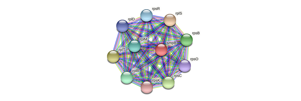 smpB protein (Pedobacter sp. BAL39) - STRING interaction network