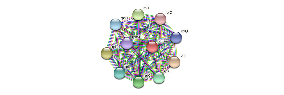 rpmE2 protein (Pedobacter sp. BAL39) - STRING interaction network