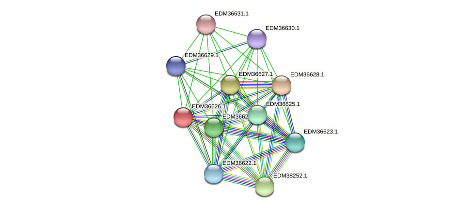 PBAL39_25200 protein (Pedobacter sp. BAL39) - STRING interaction network