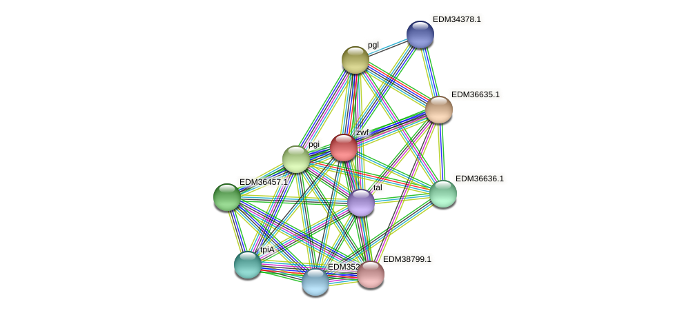 zwf protein (Pedobacter sp. BAL39) - STRING interaction network