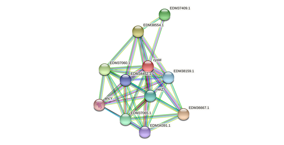 cysM protein (Pedobacter sp. BAL39) - STRING interaction network
