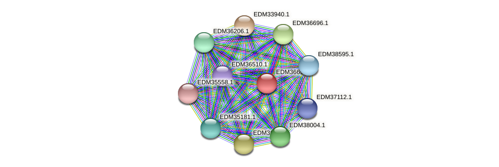 PBAL39_25555 protein (Pedobacter sp. BAL39) - STRING interaction network