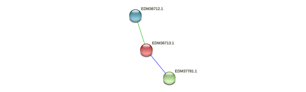 PBAL39_25635 protein (Pedobacter sp. BAL39) - STRING interaction network
