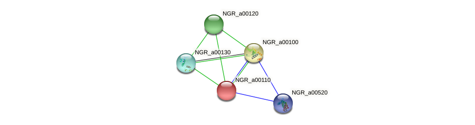 NGR_a00110 protein (Sinorhizobium fredii NGR234) - STRING interaction network