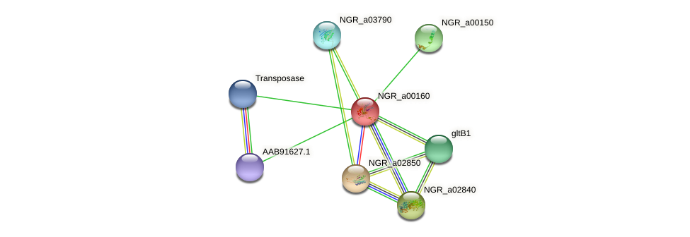 NGR_a00160 protein (Sinorhizobium fredii NGR234) - STRING interaction network