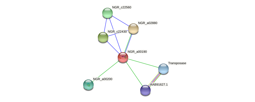 NGR_a00190 protein (Sinorhizobium fredii NGR234) - STRING interaction network