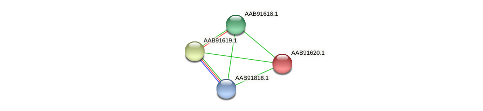 AAB91620.1 protein (Sinorhizobium fredii NGR234) - STRING interaction network