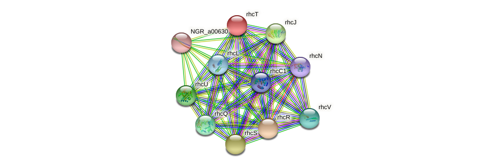 rhcT protein (Sinorhizobium fredii NGR234) - STRING interaction network