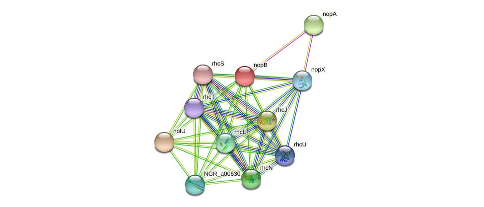 nopB protein (Sinorhizobium fredii NGR234) - STRING interaction network