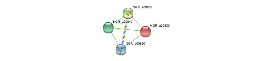 NGR_a00830 protein (Sinorhizobium fredii NGR234) - STRING interaction network