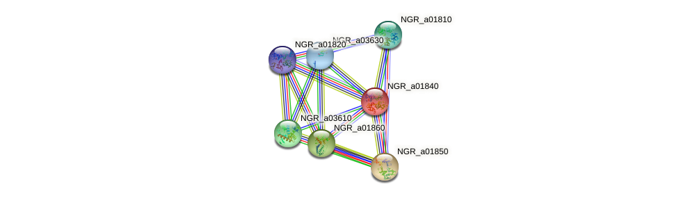 NGR_a01840 protein (Sinorhizobium fredii NGR234) - STRING interaction network