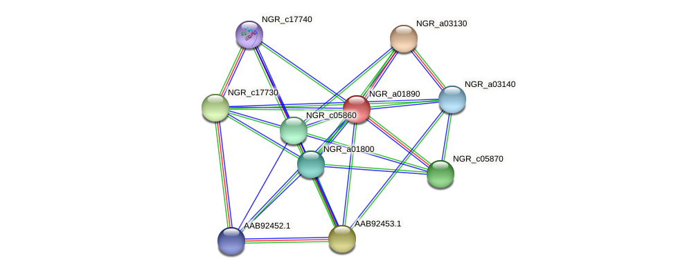 NGR_a01890 protein (Sinorhizobium fredii NGR234) - STRING interaction network