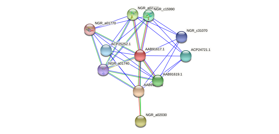 AAB91617.1 protein (Sinorhizobium fredii NGR234) - STRING interaction network