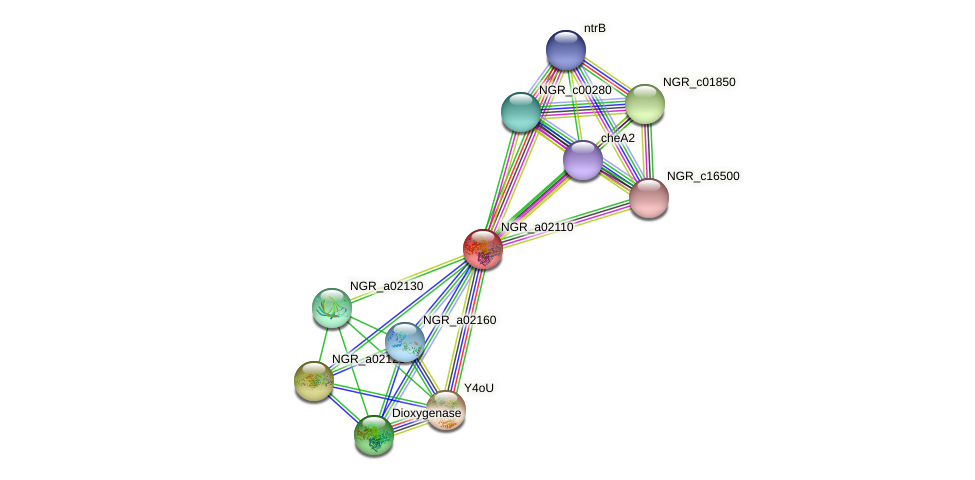 NGR_a02110 protein (Sinorhizobium fredii NGR234) - STRING interaction network