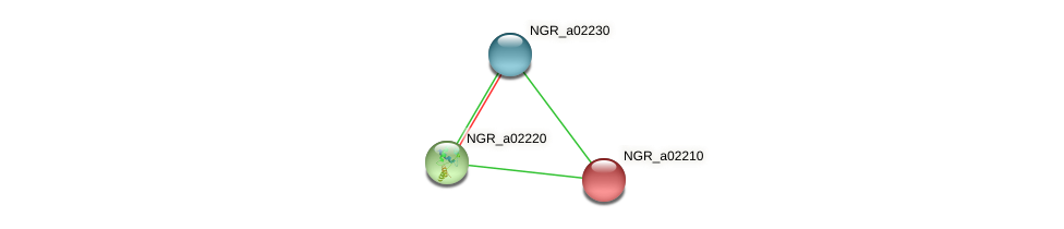 NGR_a02210 protein (Sinorhizobium fredii NGR234) - STRING interaction network