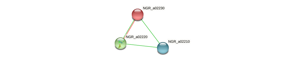 NGR_a02230 protein (Sinorhizobium fredii NGR234) - STRING interaction network