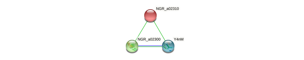 NGR_a02310 protein (Sinorhizobium fredii NGR234) - STRING interaction network