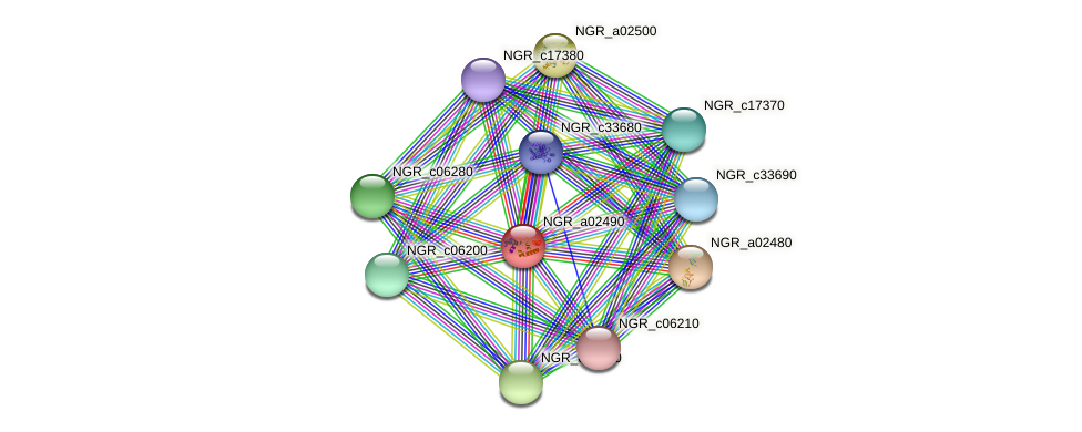 NGR_a02490 protein (Sinorhizobium fredii NGR234) - STRING interaction network