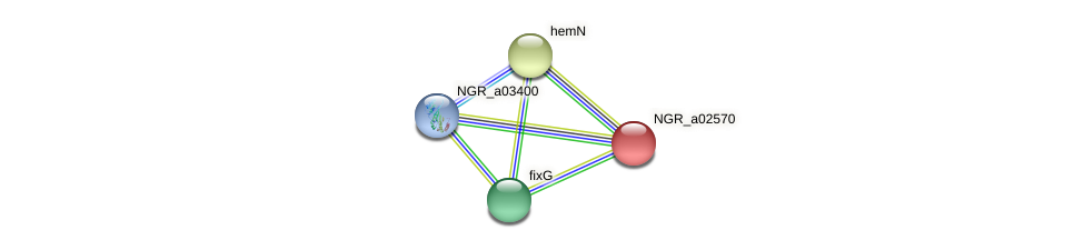 NGR_a02570 protein (Sinorhizobium fredii NGR234) - STRING interaction network