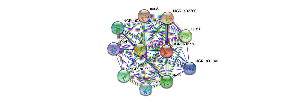 NGR_a02770 protein (Sinorhizobium fredii NGR234) - STRING interaction network