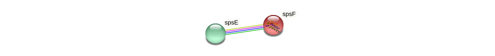spsF protein (Sinorhizobium fredii NGR234) - STRING interaction network