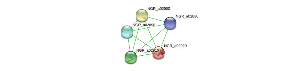 NGR_a02920 protein (Sinorhizobium fredii NGR234) - STRING interaction network