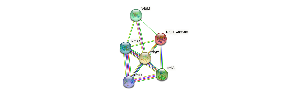 NGR_a03500 protein (Sinorhizobium fredii NGR234) - STRING interaction network