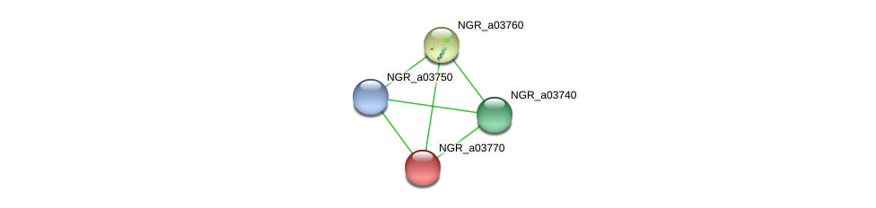 NGR_a03770 protein (Sinorhizobium fredii NGR234) - STRING interaction network