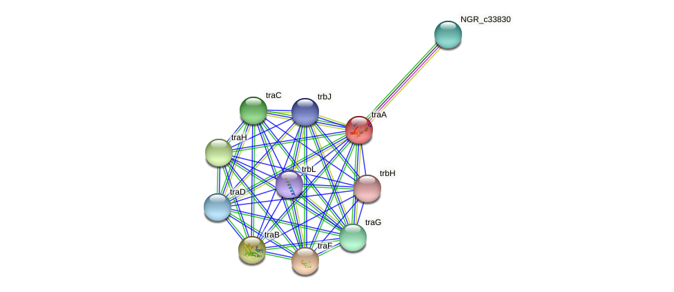 traA protein (Sinorhizobium fredii NGR234) - STRING interaction network