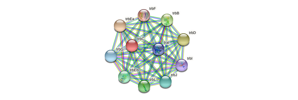 trbC protein (Sinorhizobium fredii NGR234) - STRING interaction network