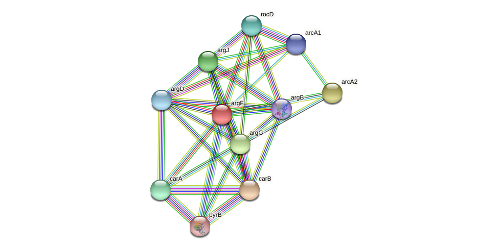 argF protein (Sinorhizobium fredii NGR234) - STRING interaction network