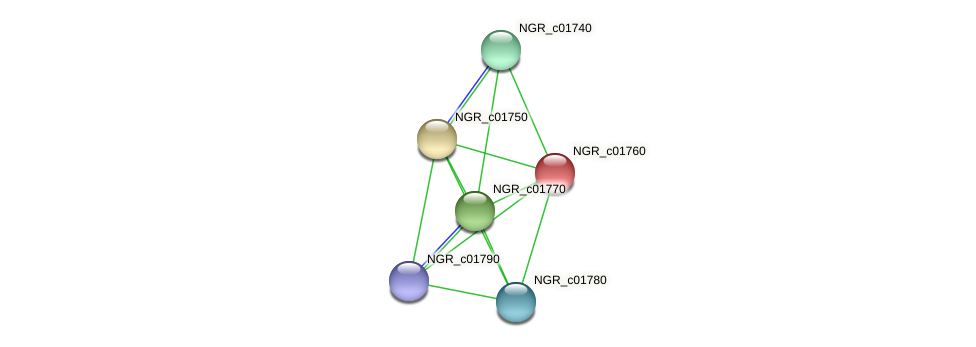 NGR_c01760 protein (Sinorhizobium fredii NGR234) - STRING interaction network