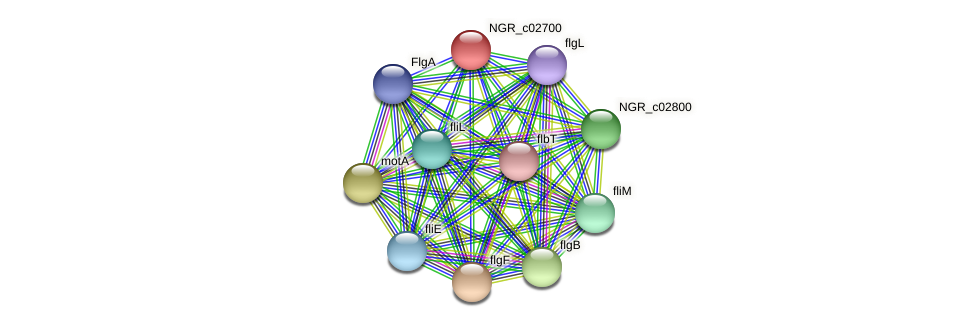 NGR_c02700 protein (Sinorhizobium fredii NGR234) - STRING interaction network