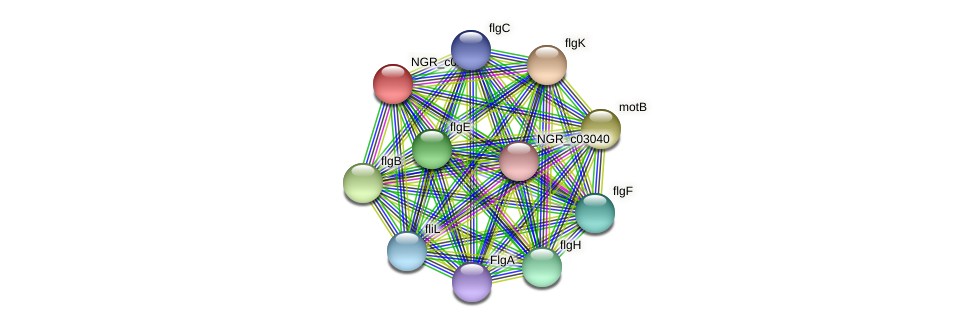 NGR_c02860 protein (Sinorhizobium fredii NGR234) - STRING interaction network