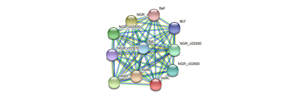 motC protein (Sinorhizobium fredii NGR234) - STRING interaction network
