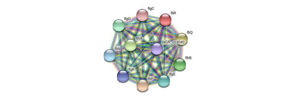 fliR protein (Sinorhizobium fredii NGR234) - STRING interaction network