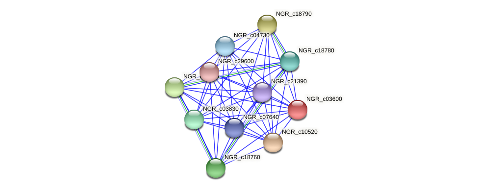 NGR_c03600 protein (Sinorhizobium fredii NGR234) - STRING interaction network
