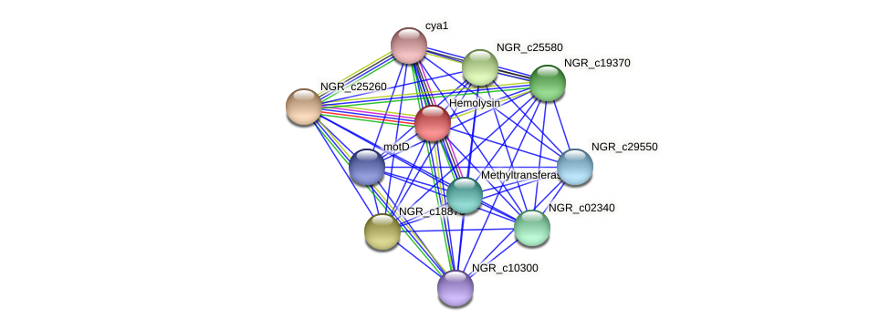 NGR_c03650 protein (Sinorhizobium fredii NGR234) - STRING interaction network