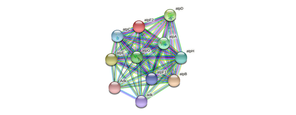 atpF2 protein (Sinorhizobium fredii NGR234) - STRING interaction network